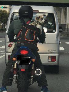 ヘルメット被らんと(T . T)